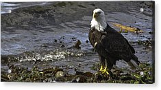 Acrylic Print featuring the photograph Eagle On The Beach by Timothy Latta