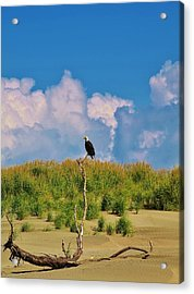 Eagle On Watch Acrylic Print