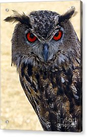 Eagle Owl Acrylic Print by Anthony Sacco