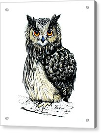 Eagle Owl Acrylic Print by Isabel Salvador