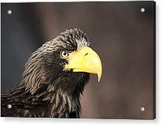 Eagle Portrait Acrylic Print by Alex Sukonkin
