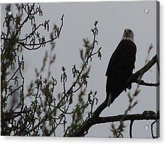Eagle Series Acrylic Print