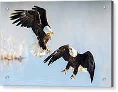 Eagle Showdown Acrylic Print