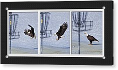 Eagle Triptych Acrylic Print by Rob Graham