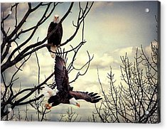 Eagle Watching Eagle Acrylic Print by Gary Smith