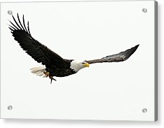 Eagle With Fish Acrylic Print