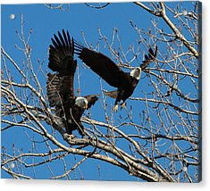 Acrylic Print featuring the photograph Eagles by John Freidenberg