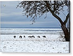 Acrylic Print featuring the photograph Early Arrival by Kennerth and Birgitta Kullman