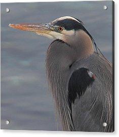 Early Bird 2 Acrylic Print