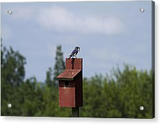 Early Bird Catches The Worm Acrylic Print