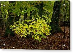 Early Fall In Bidwell Park Acrylic Print