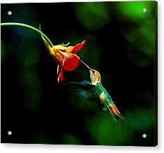 Early Hummingbird Acrylic Print