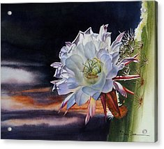 Early Morning Argentine Giant Cactus Flower Acrylic Print
