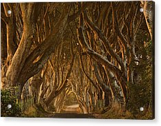 Early Morning Dark Hedges Acrylic Print by Derek Smyth