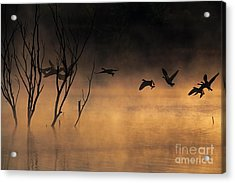 Early Morning Flight Acrylic Print by Elizabeth Winter