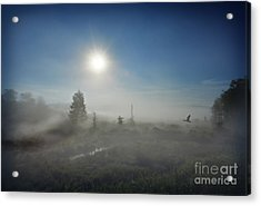 Early Morning Fog At Canaan Valley Acrylic Print by Dan Friend