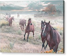 Early Morning Fog Acrylic Print by Bill Stephens