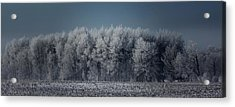 Early Morning Frost Acrylic Print by Sarah Boyd