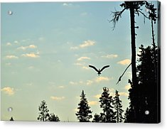 Early Morning Heron In Silhouette Acrylic Print by Rich Rauenzahn