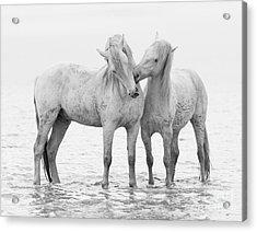 Early Morning Horse Play Acrylic Print