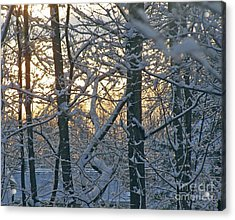 Early Morning Light Acrylic Print by Louise Peardon