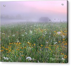 Early Morning Meadow Acrylic Print