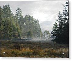 Early Morning Mist Acrylic Print