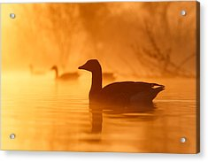 Early Morning Mood Acrylic Print by Roeselien Raimond