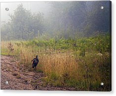 Early Morning Strole Acrylic Print by Ron Haist
