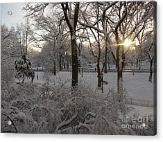 Early Morning Sun In Central Park.  Acrylic Print by Winifred Butler