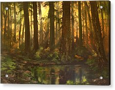 Early Morning Sun On Cannock Chase Acrylic Print