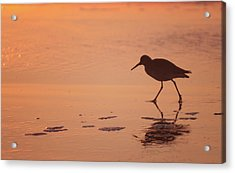 Acrylic Print featuring the photograph Early Morning Walk by Sharon Jones