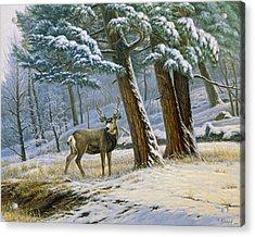 Early Snow- Mule Deer Acrylic Print by Paul Krapf