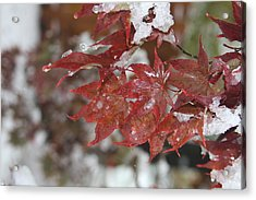 Acrylic Print featuring the photograph Early Snow by Vadim Levin