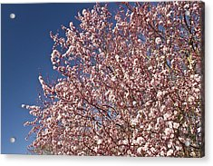 Early Spring Acrylic Print by Larry Darnell