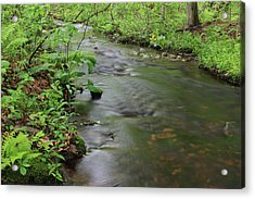 Early Summer At Borden Brook Acrylic Print by Andrew Pacheco