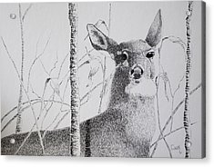 Early Winters Whitetail Acrylic Print