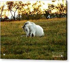 Easier Lying Down Acrylic Print