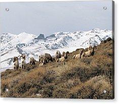 East Humboldt Rams Acrylic Print