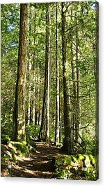 East Sooke Park Trail Acrylic Print