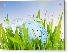 Easter Egg In Grass Acrylic Print by Elena Elisseeva