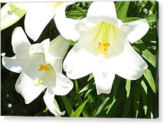 Easter Lilies At Longue Vue Acrylic Print by Katie Spicuzza