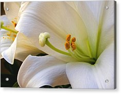 Acrylic Print featuring the photograph Easter Lily by Bonnie Willis