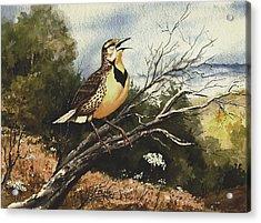 Eastern Meadowlark Acrylic Print by Sam Sidders
