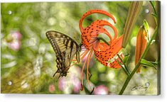 Eastern Tiger Swallowtail - Papilio Glaucus - Butterfly On Tiger Lily Acrylic Print
