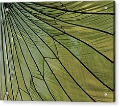 Easy- Breezy- Parachute Acrylic Print
