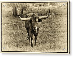 Eat Leaf Not Beef Sepia Acrylic Print