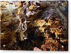 Eaten Wood Acrylic Print by Brent Dolliver