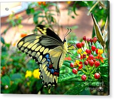 Eating On The Fly Acrylic Print