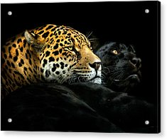 Ebony And Ivory Acrylic Print by Pedro Jarque